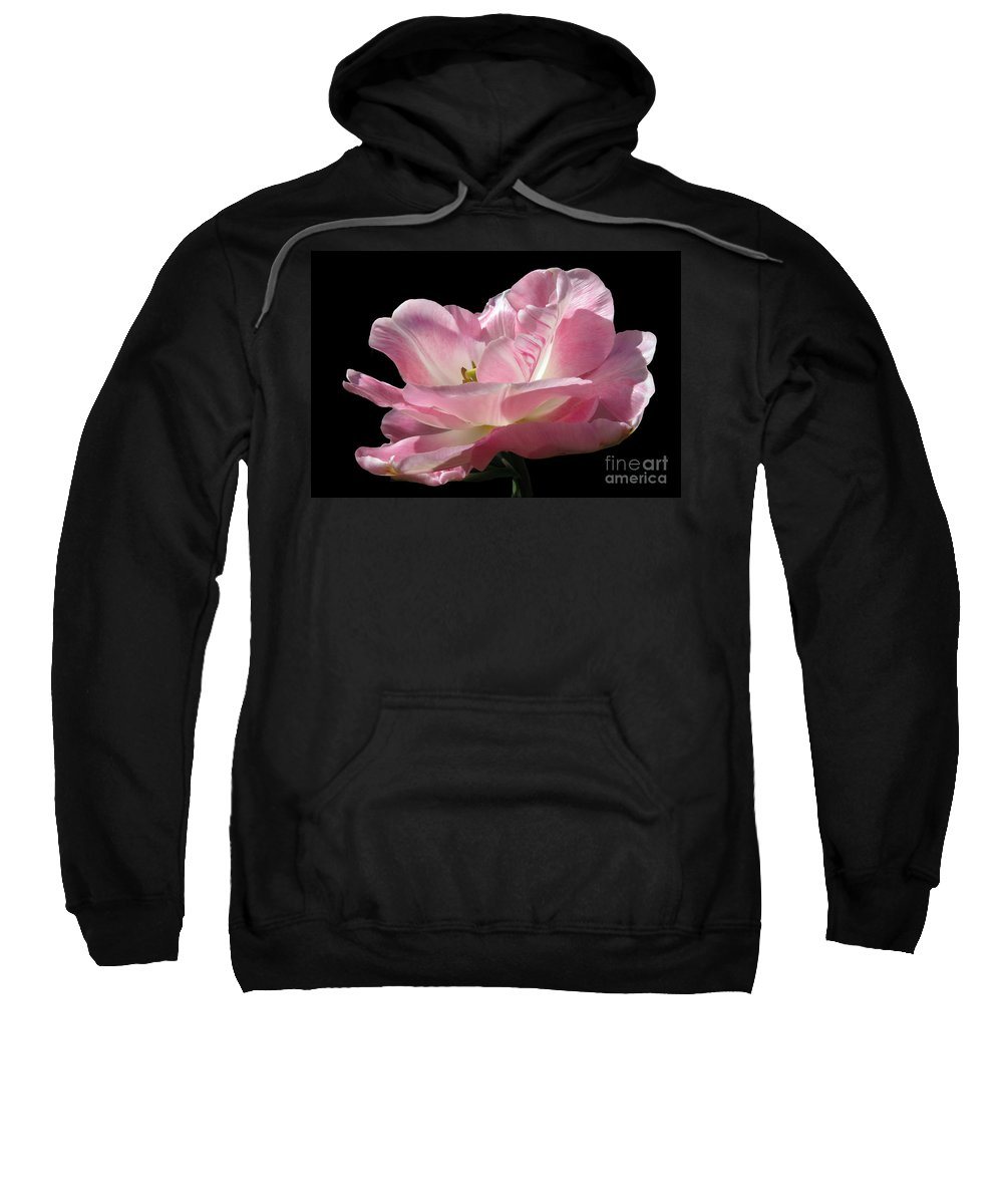Tulip Sweatshirt featuring the photograph Pink Tulip Isolated by Darleen Stry