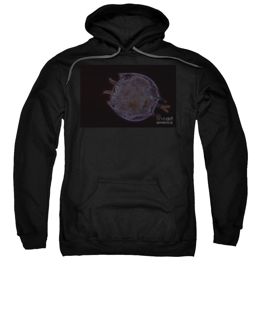 Light Microscopy Sweatshirt featuring the photograph Platyias Rotifer by M. I. Walker