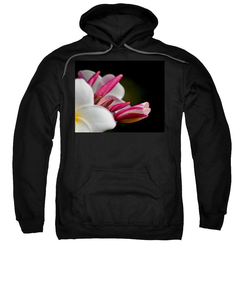 puu Alii Sweatshirt featuring the photograph Plumeria In The Wind by Dan McManus