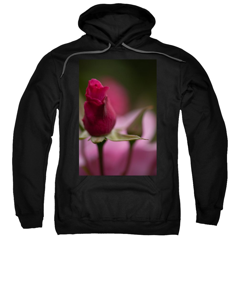 Rose Sweatshirt featuring the photograph Pointedly by Mike Reid