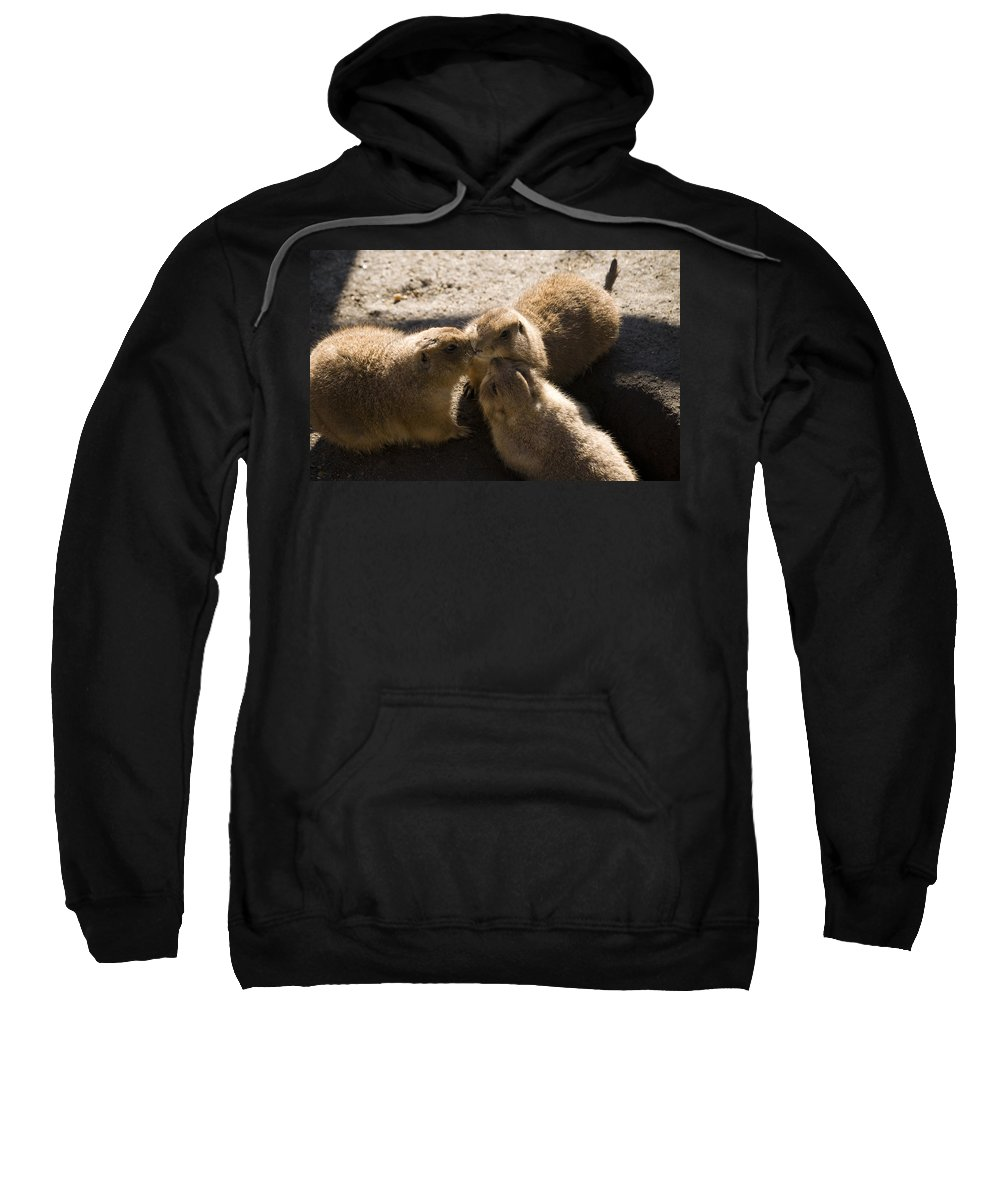 Prairie Dog Sweatshirt featuring the photograph Prairie Dog Gossip Session by Trish Tritz