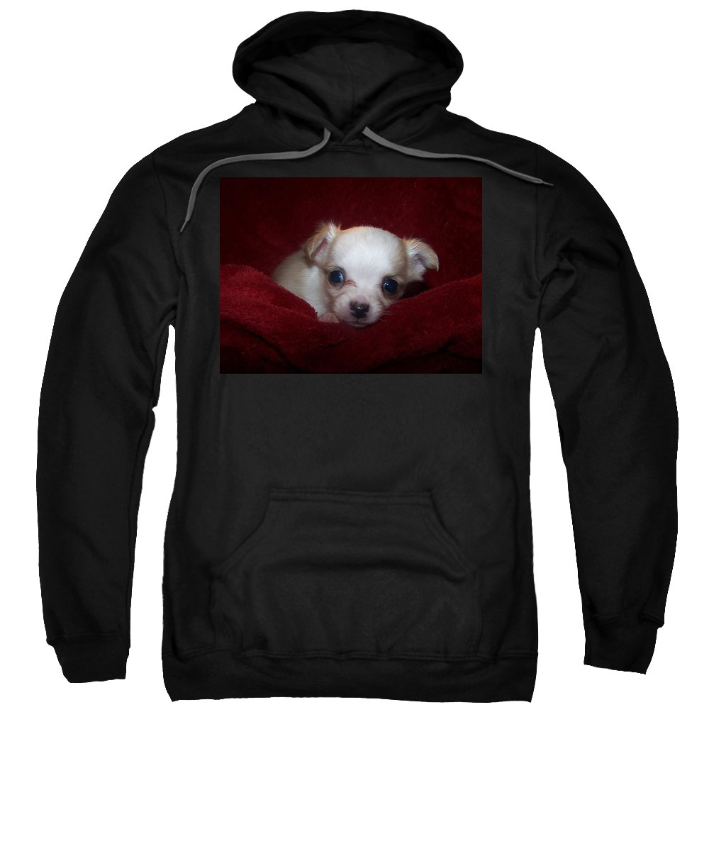 Digital Photography Sweatshirt featuring the photograph Precious by Christy Leigh