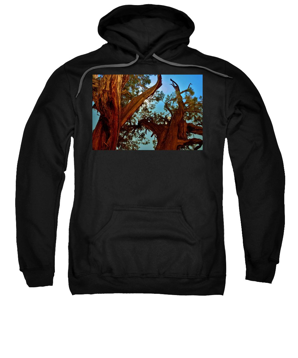 Tree Sweatshirt featuring the photograph Reaching For The Sky by Ellen Heaverlo