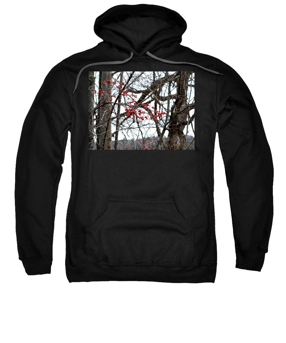 New York Sweatshirt featuring the photograph Red Berries White Sky by Lorraine Devon Wilke