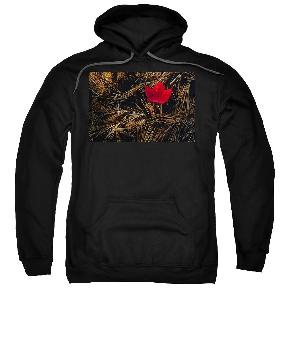 Canadian Sweatshirt featuring the photograph Red Maple Leaf On Pine Needles In Pool by Mike Grandmailson