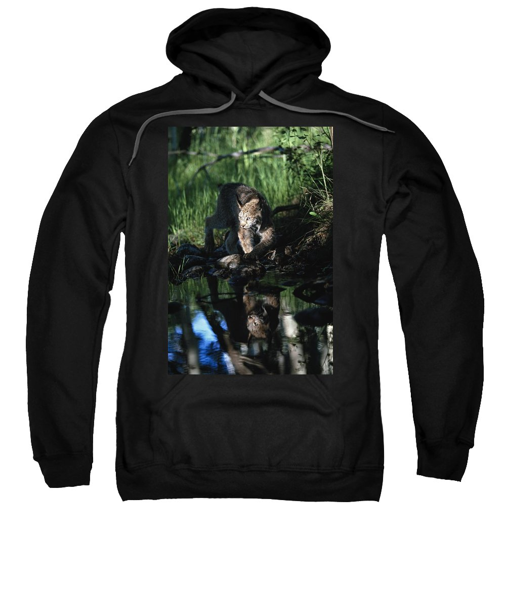 Animal Sweatshirt featuring the photograph Reflection Of Lynx In Stream Idaho, Usa by David Ponton