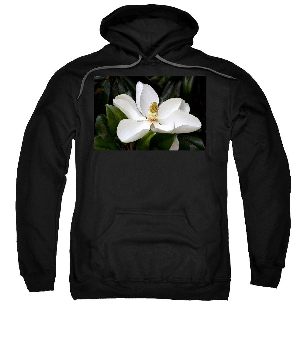 Magnolia X Wieseneri Sweatshirt featuring the photograph Regal Southern Magnolia Blossom by Kathy Clark