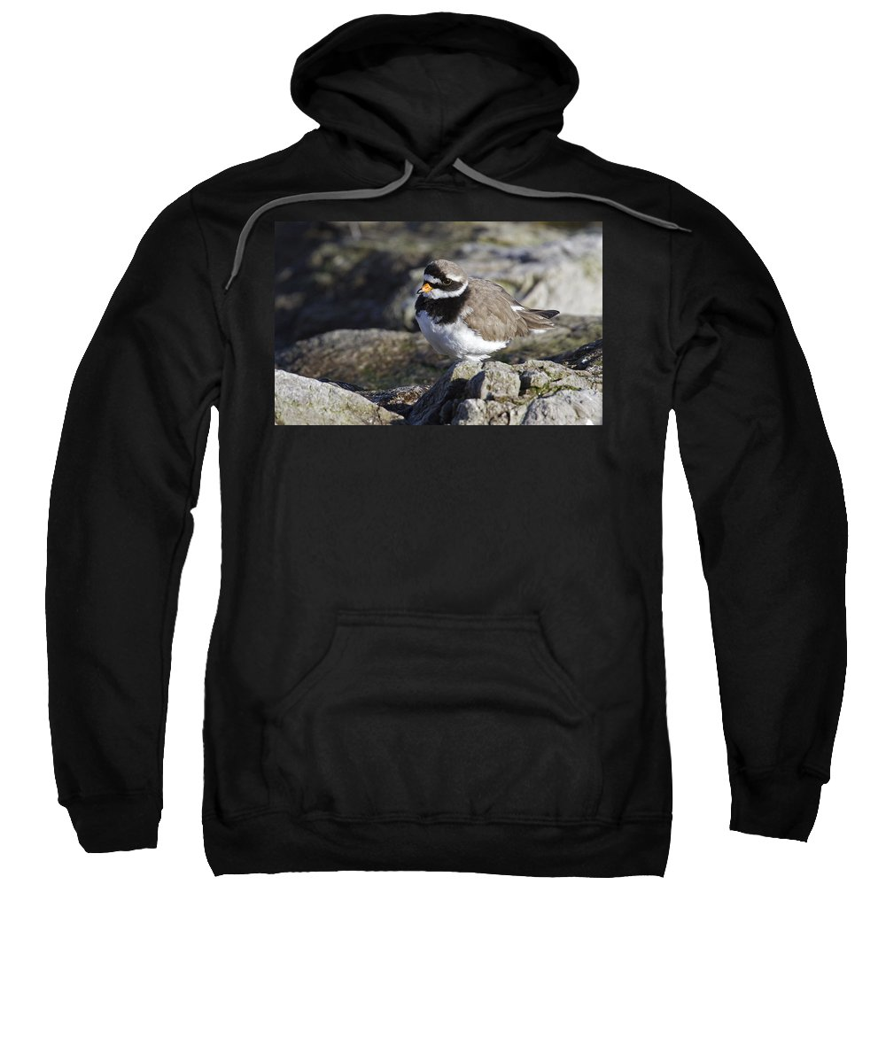 Ringed Plover Sweatshirt featuring the photograph Ringed Plover by Bob Kemp