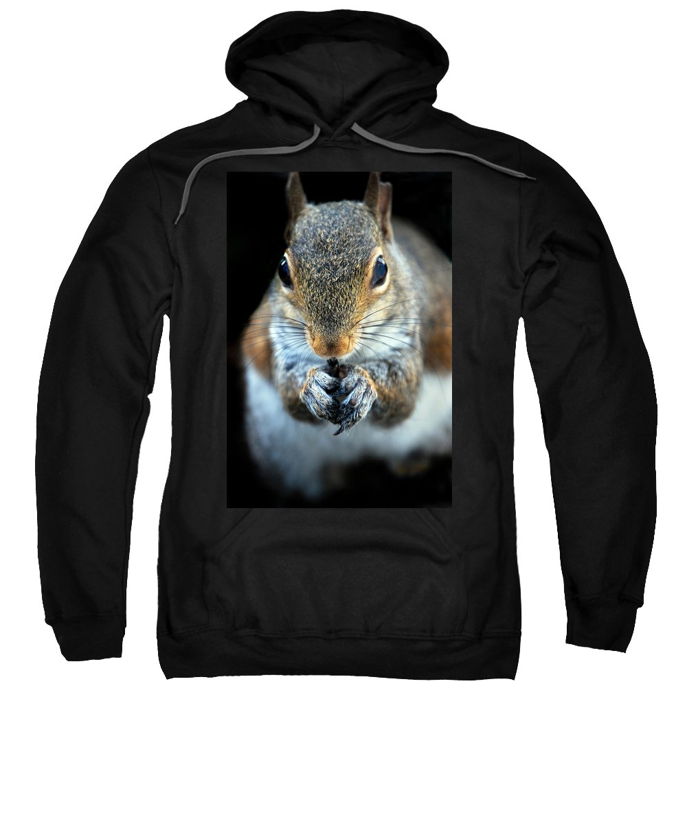 Squirrel Sweatshirt featuring the photograph Rodent by Skip Willits