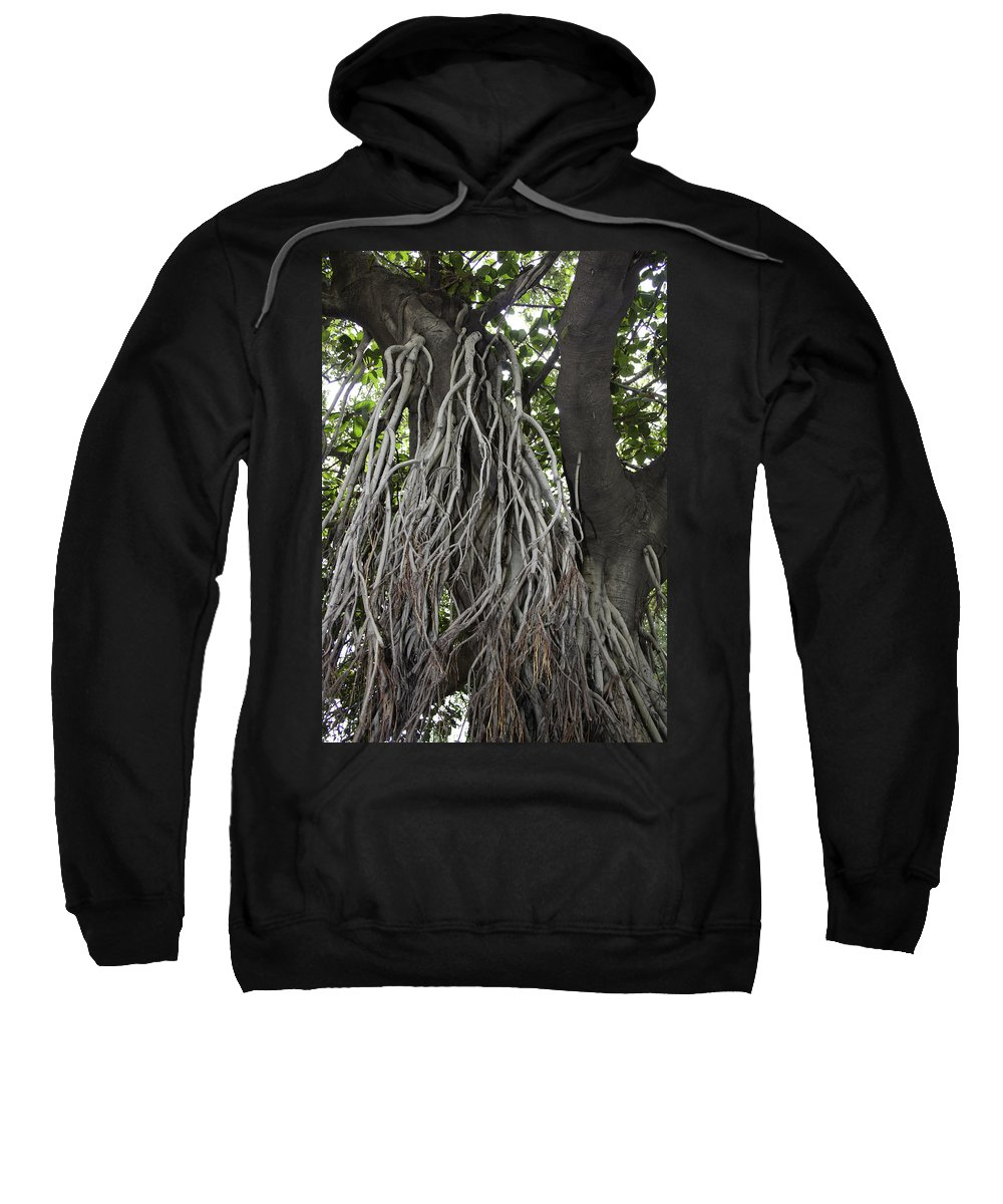 Amritsar Sweatshirt featuring the photograph Roots From A Large Tree Inside Jallianwala Bagh by Ashish Agarwal
