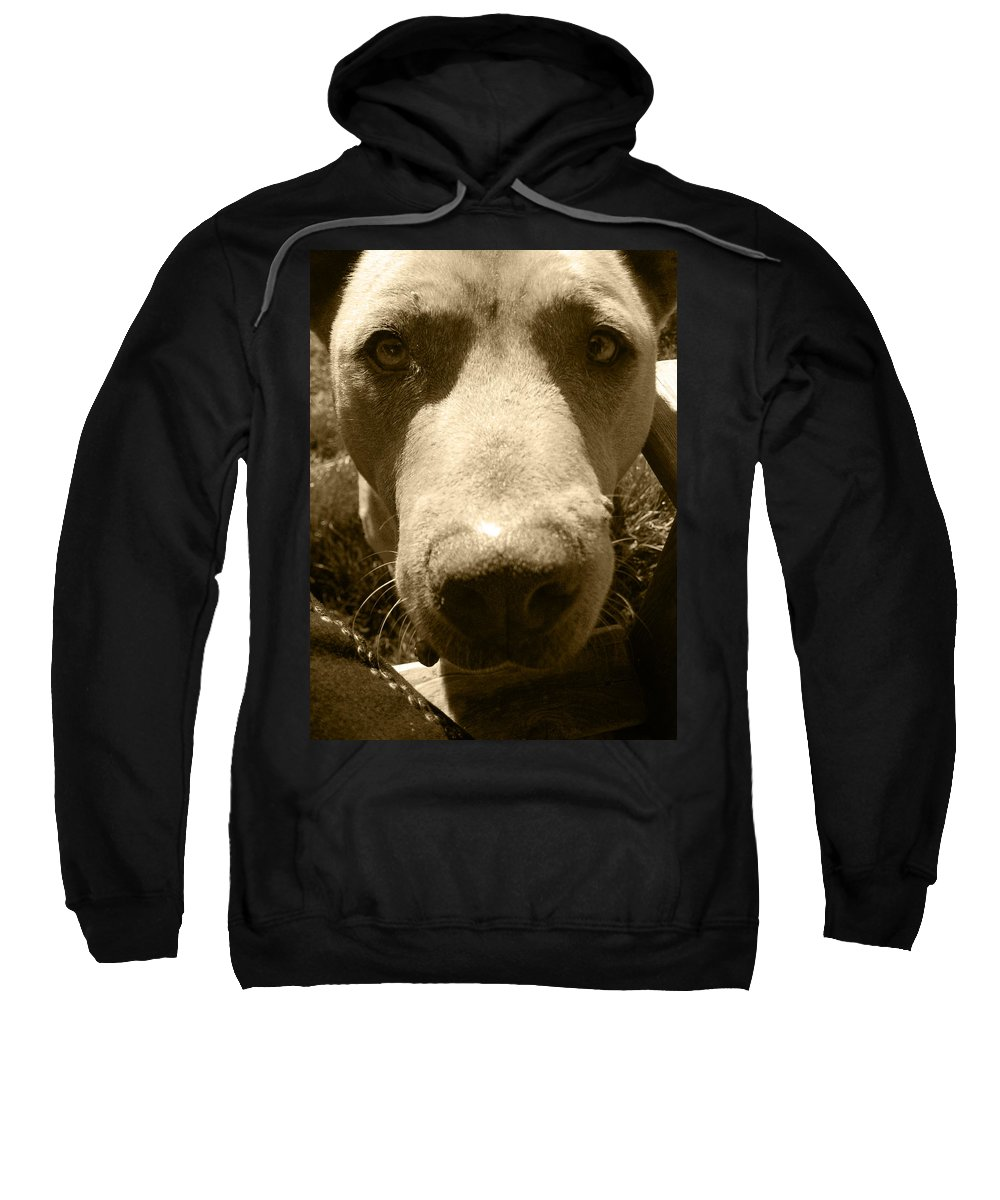 Pitbull Sweatshirt featuring the photograph Roscoe Pitbull Eyes by Kym Backland