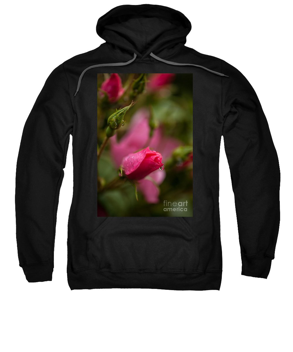 Flower Sweatshirt featuring the photograph Rose Drop by Mike Reid
