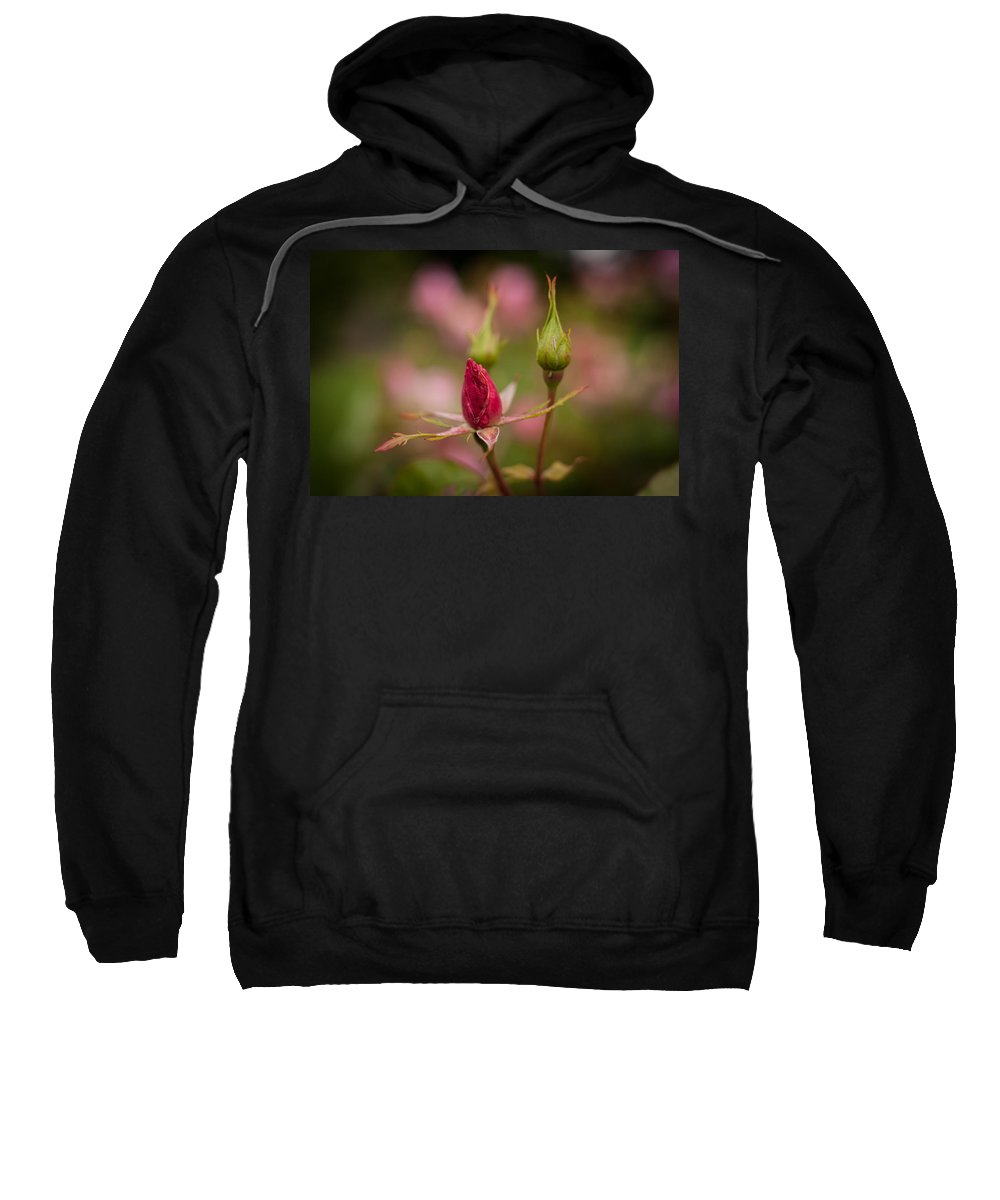 Flower Sweatshirt featuring the photograph Rosebud Standout by Mike Reid