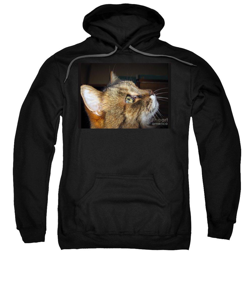 Kitty Sweatshirt featuring the photograph Runcius- The King Kitty by Ausra Huntington nee Paulauskaite