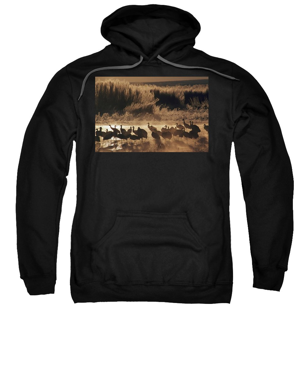 Bosque Del Apache National Wildlife Refuge Sweatshirt featuring the photograph Sandhill Crane Grus Canadensis Flock On by David Ponton