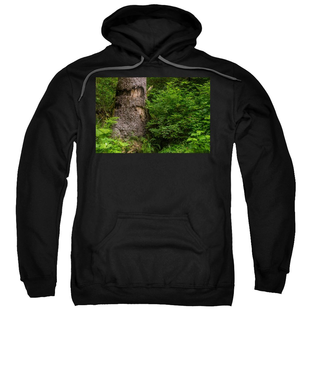 Fern Canyon Sweatshirt featuring the photograph Sasquatch Rubbing Tree by Greg Nyquist