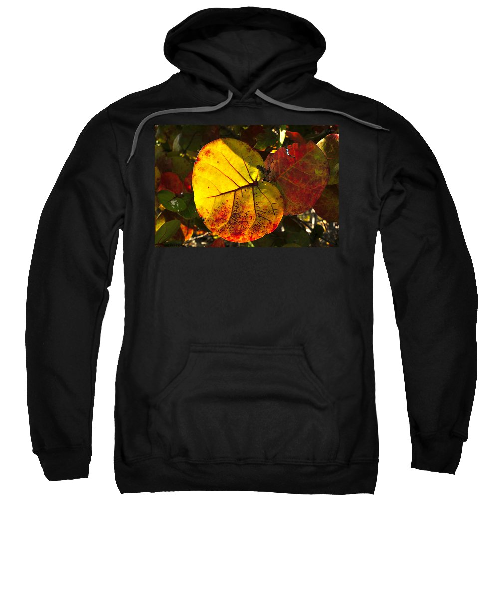 Fine Art Photography Sweatshirt featuring the photograph Sea Grape Leaves by David Lee Thompson