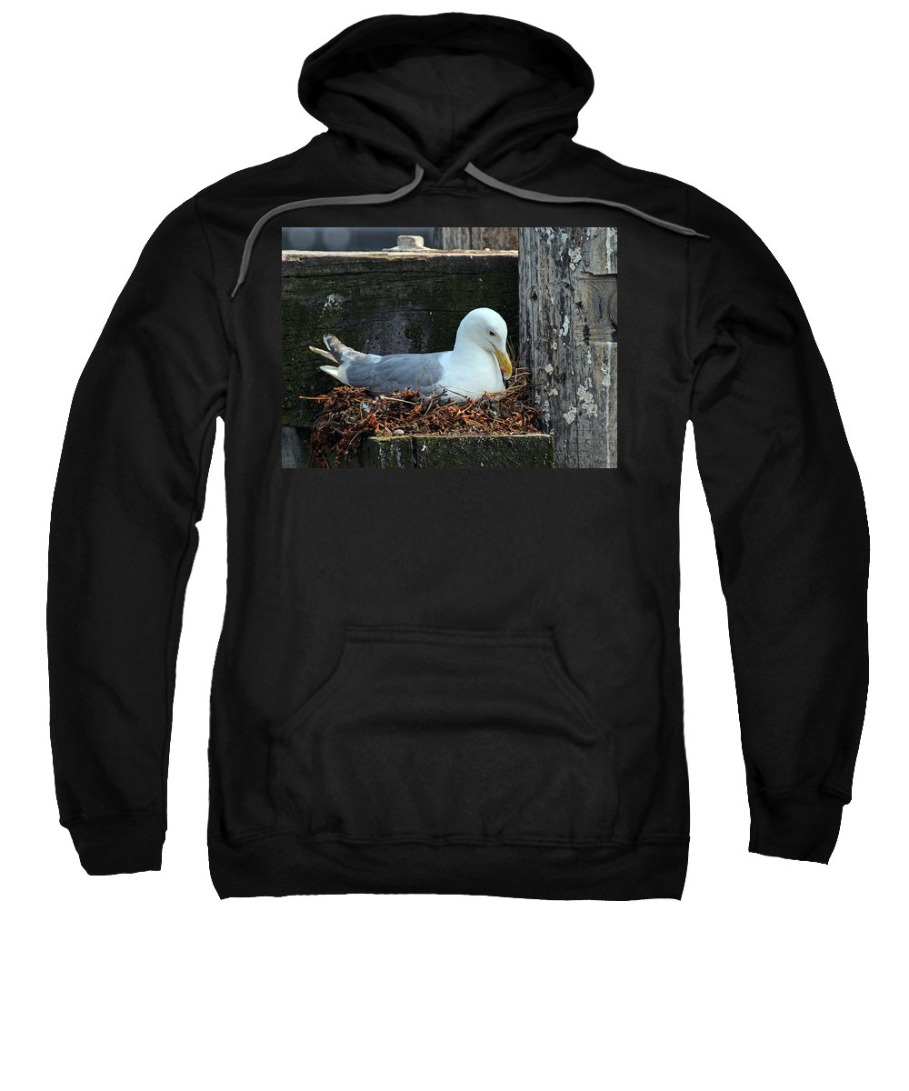 Animal Sweatshirt featuring the photograph Seagull by Paul Fell