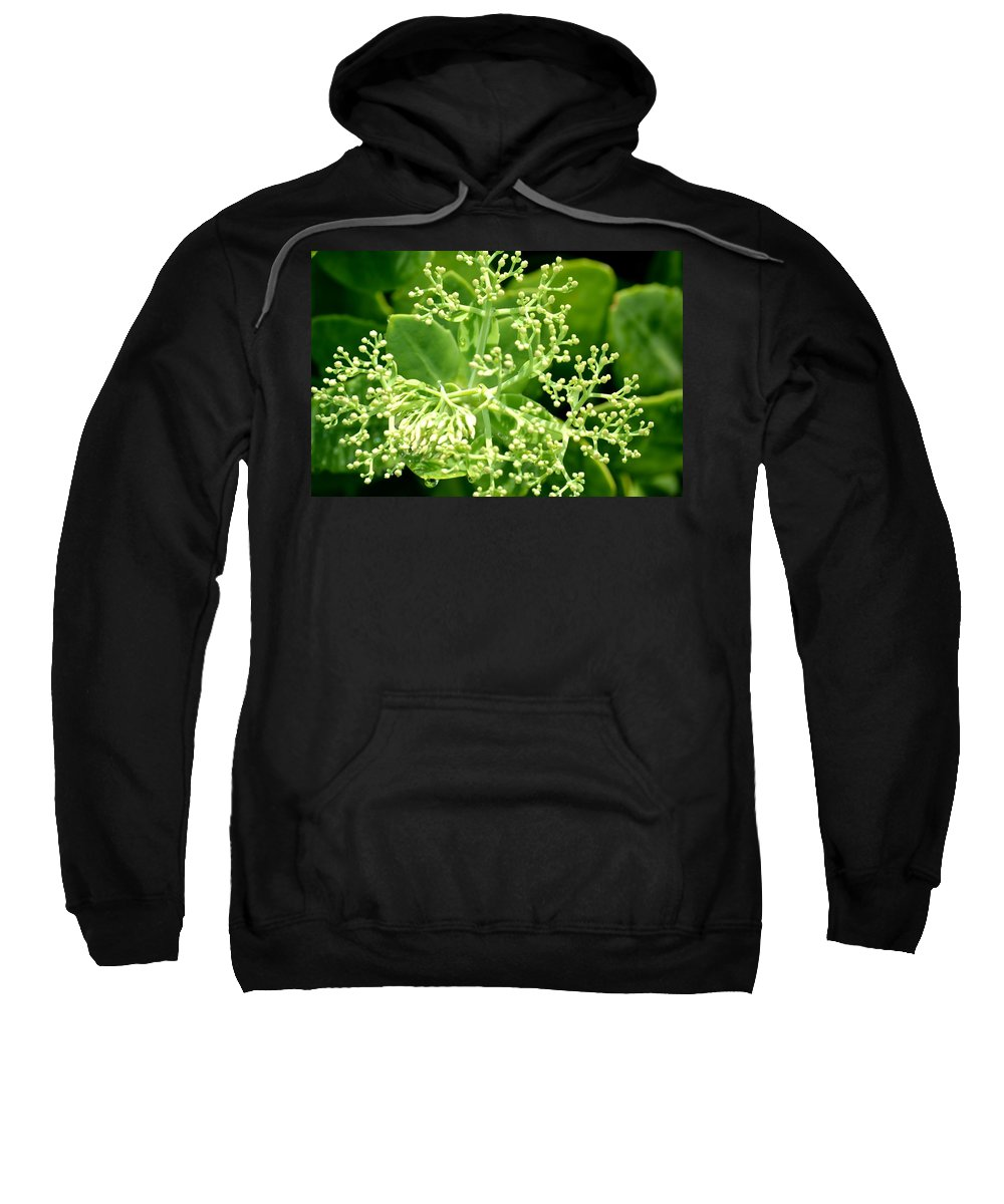 Sedum Sweatshirt featuring the photograph Sedum Droplets by Maria Urso