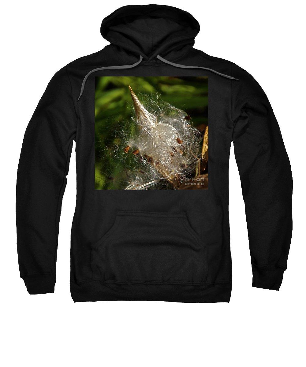 Milkweed Seed Pod Sweatshirt featuring the photograph Silky Milkweed by Byron Varvarigos
