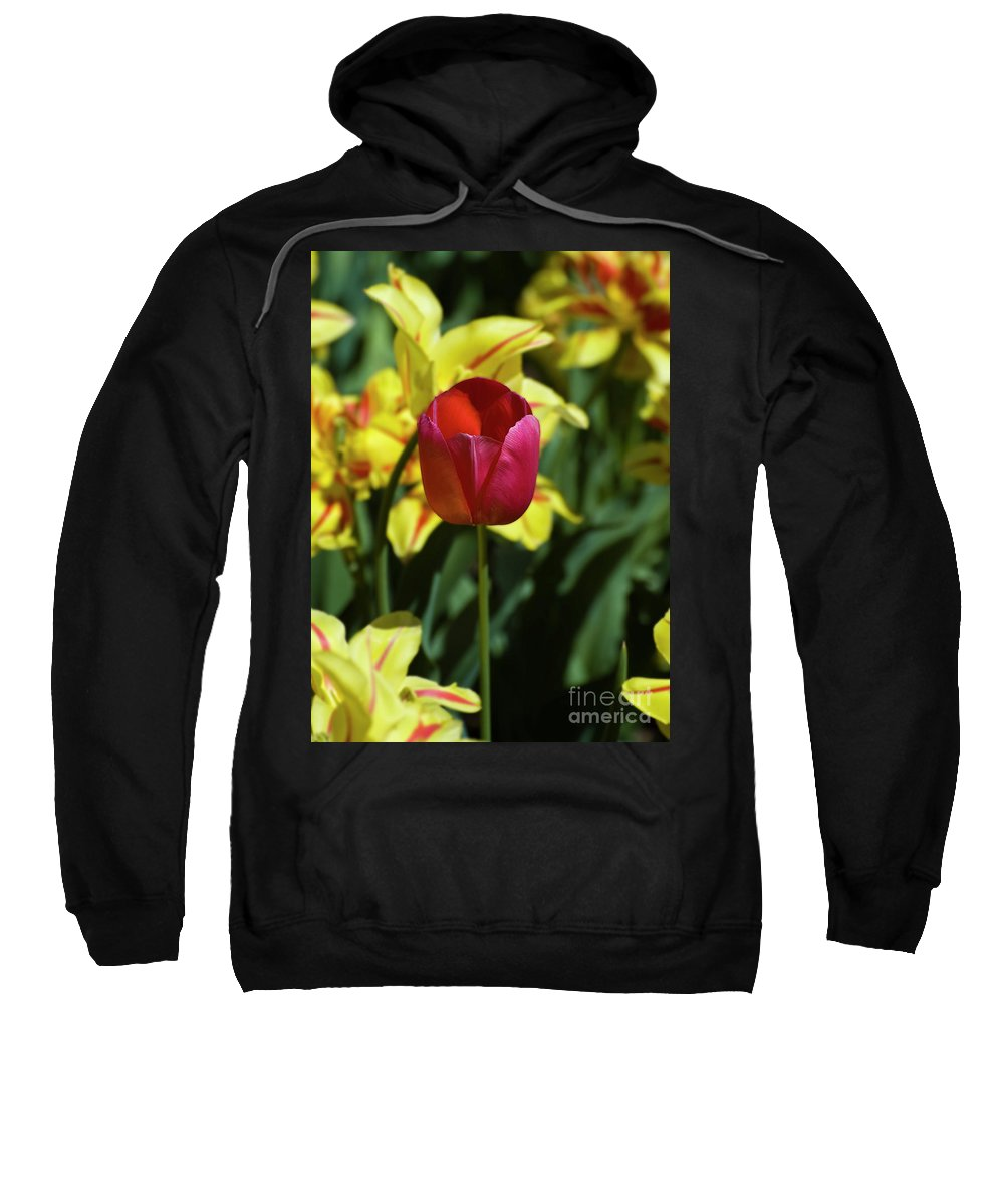 Red Tulip Sweatshirt featuring the photograph Single Red Tulip by Tim Mulina