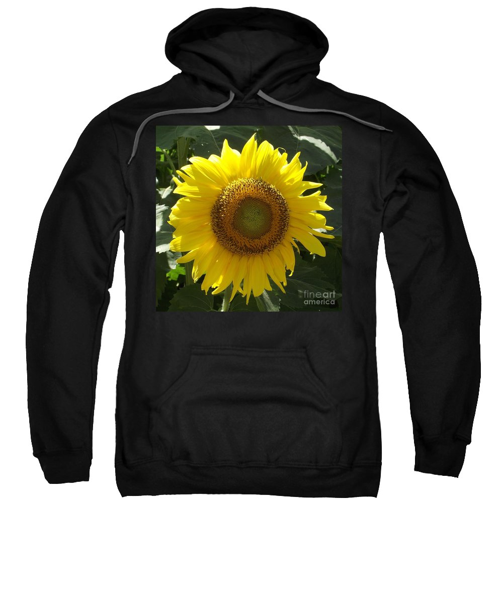 Yellow Sunflower Sweatshirt featuring the photograph Single Sunflower by Michelle Welles