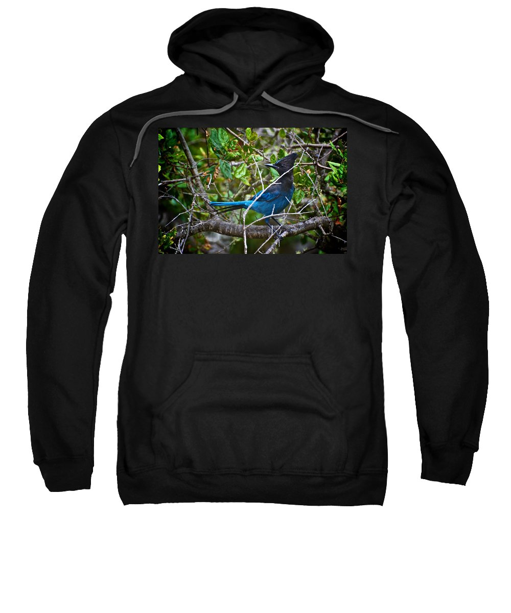 Small Blue Jay Sweatshirt featuring the photograph Small Blue Jay Of California by Eric Tressler