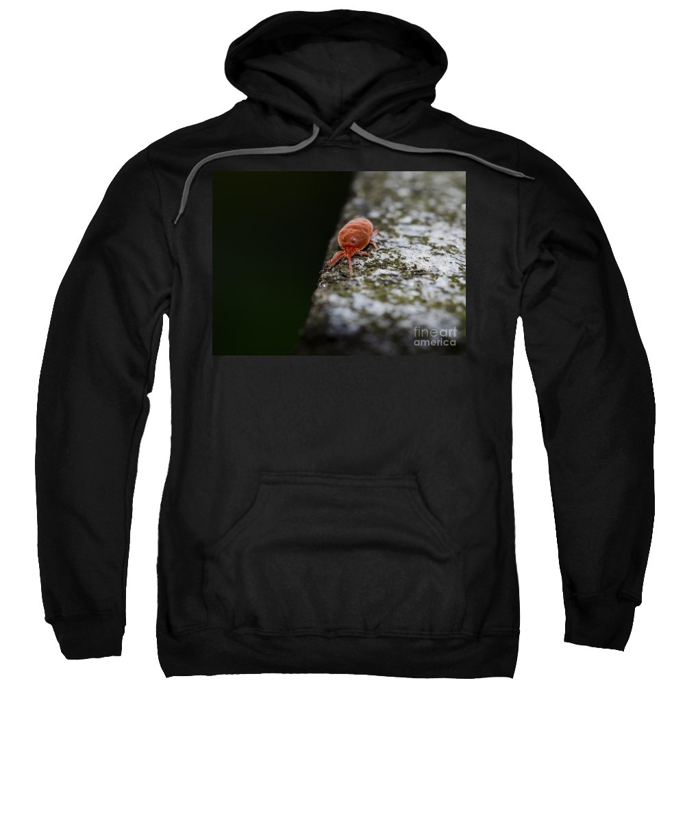 Insect Sweatshirt featuring the photograph Small Red Insect by Mats Silvan