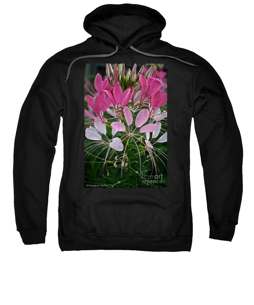 Floral Sweatshirt featuring the photograph Spider Flower by Susan Herber