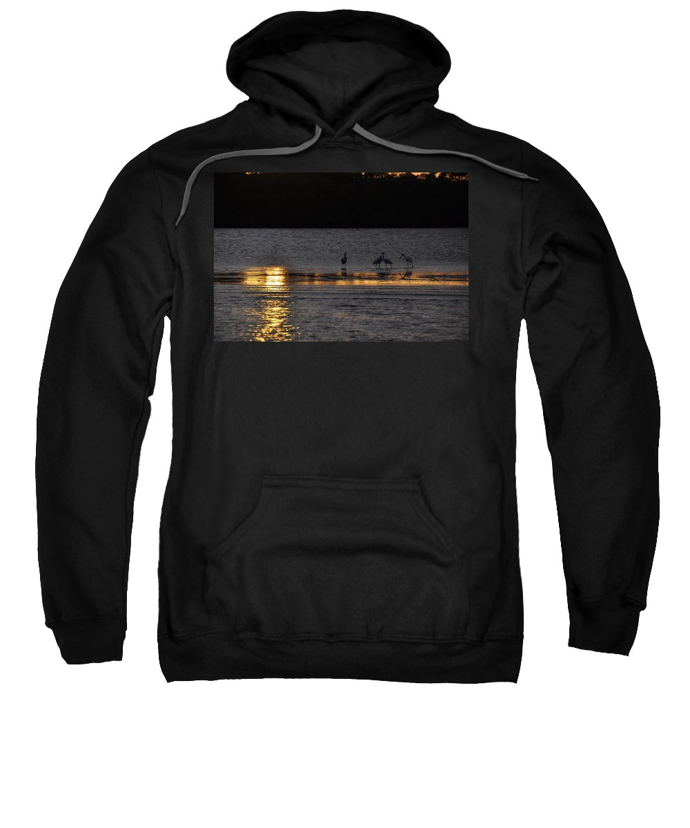 Spoonbill Sweatshirt featuring the photograph Spoonbill Gold by Rich Bodane