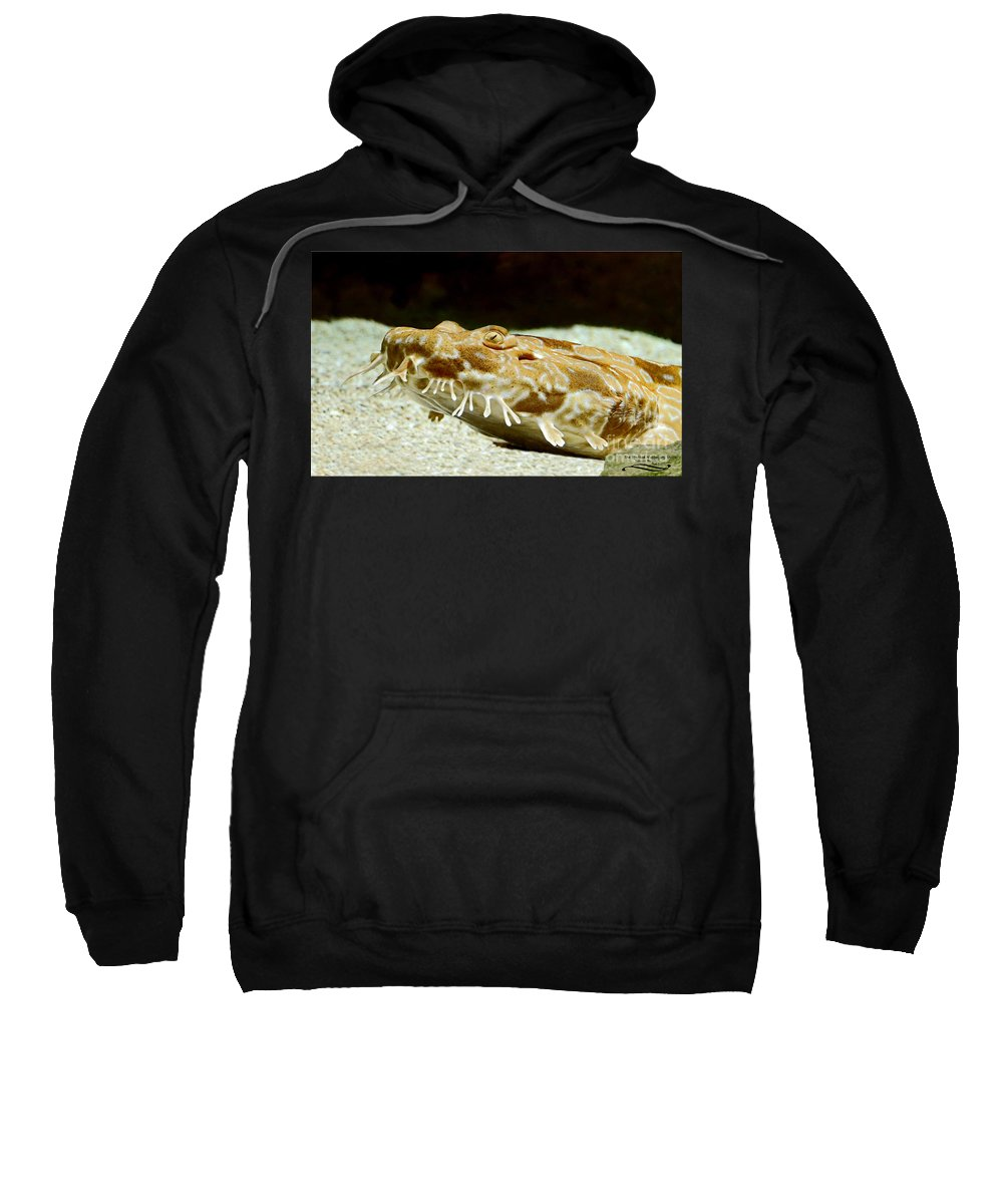 Spotted Sweatshirt featuring the photograph Spotted Wobbegong Shark by Rebecca Morgan