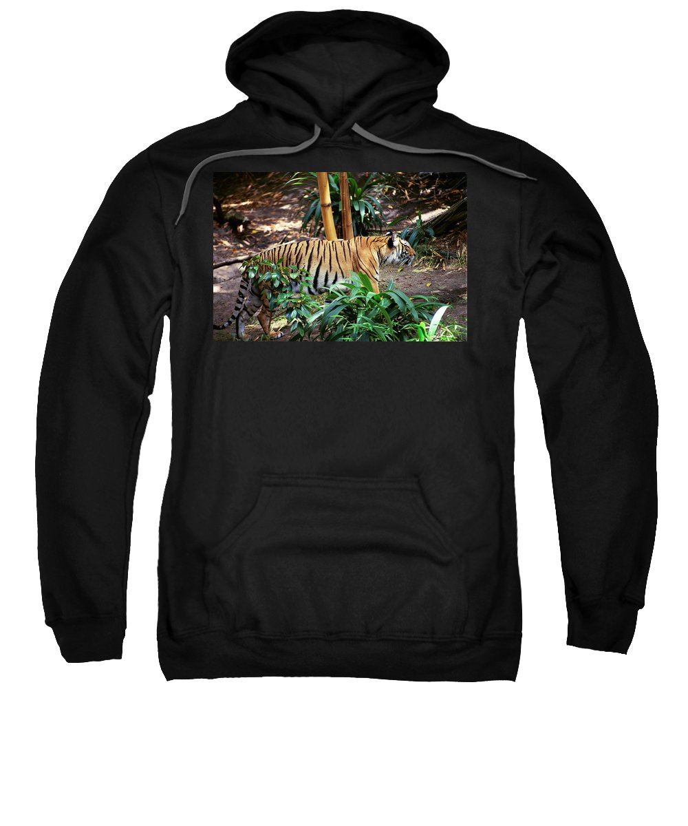 Sweatshirt featuring the photograph Stalking by Michael Frank Jr