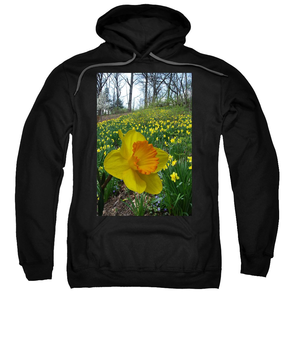 Daffodils Sweatshirt featuring the photograph Stand Out In The Crowd by Jenny Gandert
