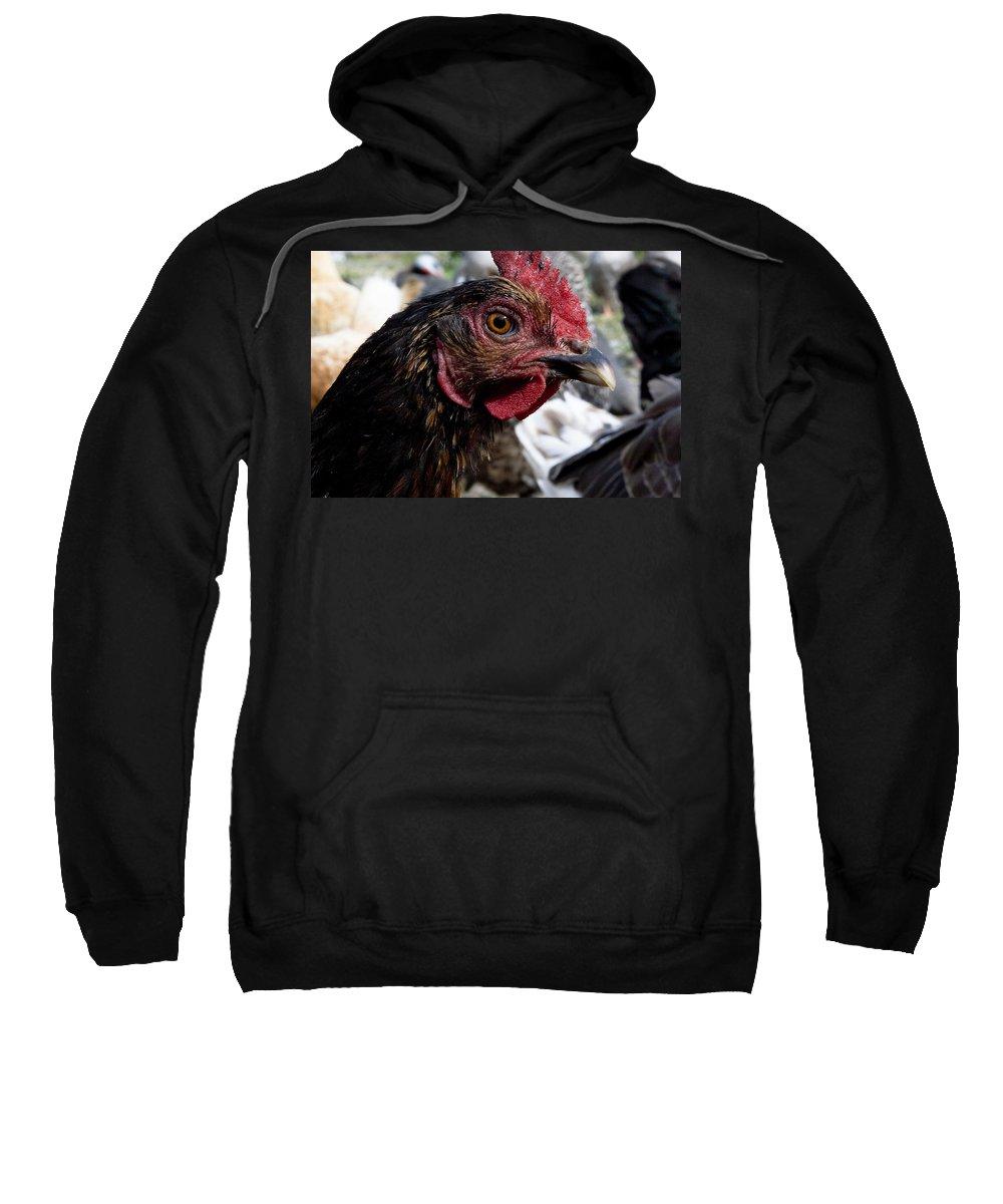 Hen Sweatshirt featuring the photograph Star Of The Hen Party by Lorraine Devon Wilke