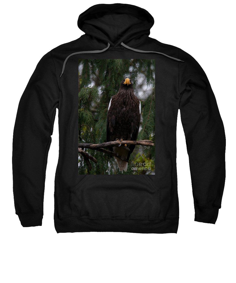 Animals Sweatshirt featuring the digital art Steller's Sea Eagle by Carol Ailles