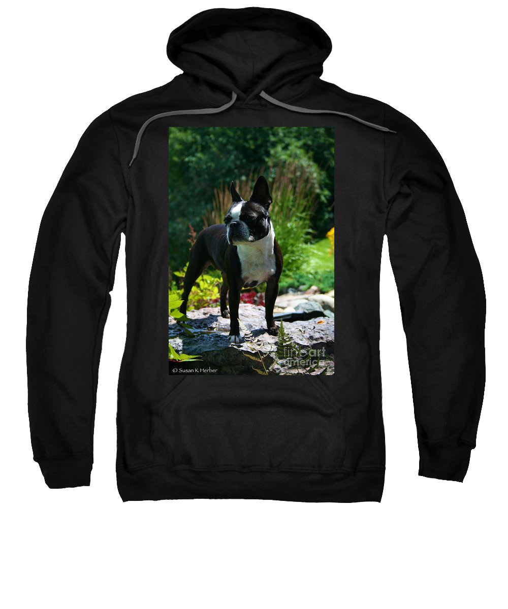 Boston Terrier Sweatshirt featuring the photograph Stephanie by Susan Herber