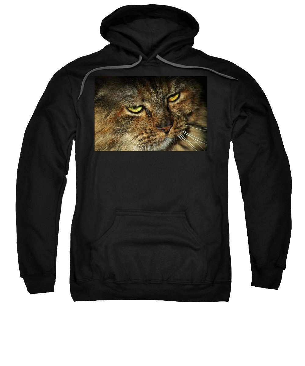 Cat Sweatshirt featuring the photograph Stubbs 2 by Carlene Salazar