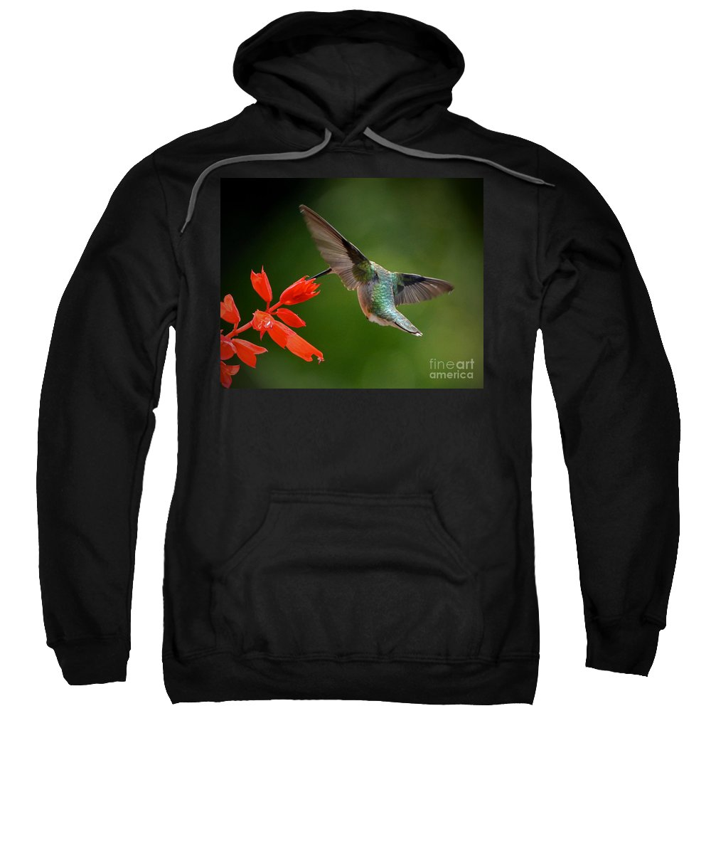 Color Photography Sweatshirt featuring the photograph Style And Grace by Sue Stefanowicz