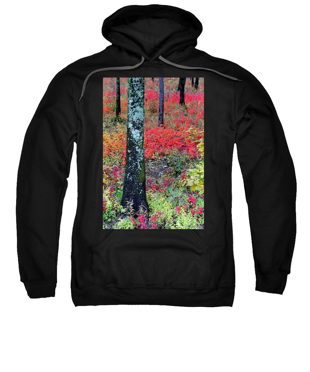 Autumn Scene Sweatshirt featuring the photograph Sumac Slope And Lichen Covered Tree by Greg Matchick