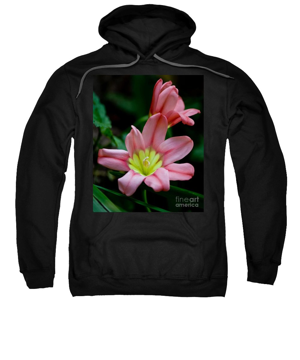 Sparaxas Sweatshirt featuring the photograph Summer Blooms by Beth Phifer