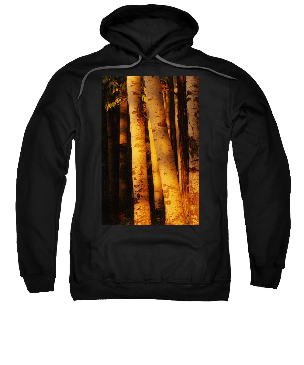 Aspen Tree Sweatshirt featuring the photograph Sunlight On Aspen Trees, Twin Falls by Mike Grandmailson