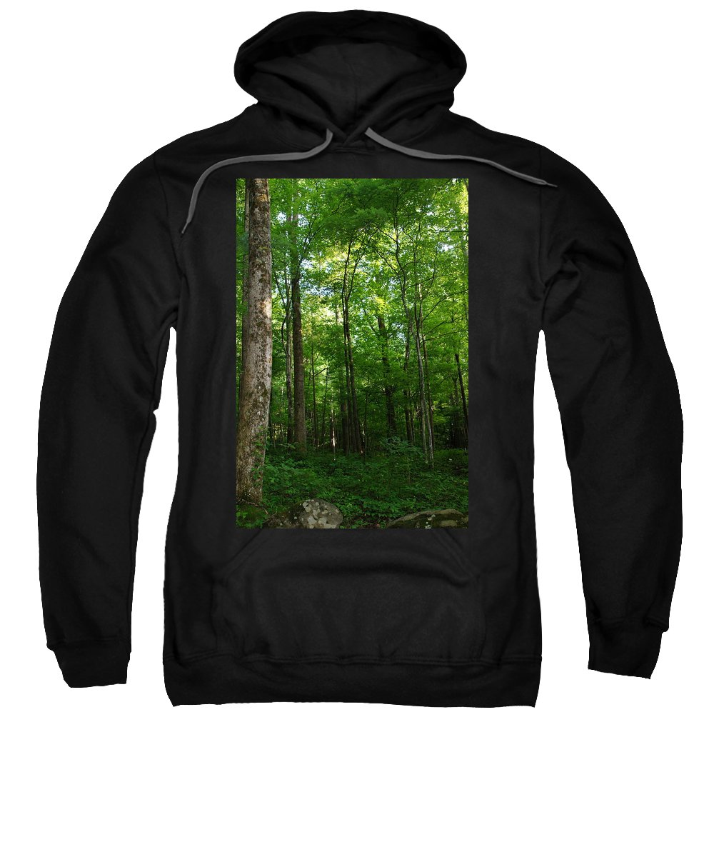 Forest Sweatshirt featuring the photograph Sunlit Forest by Megan Cohen