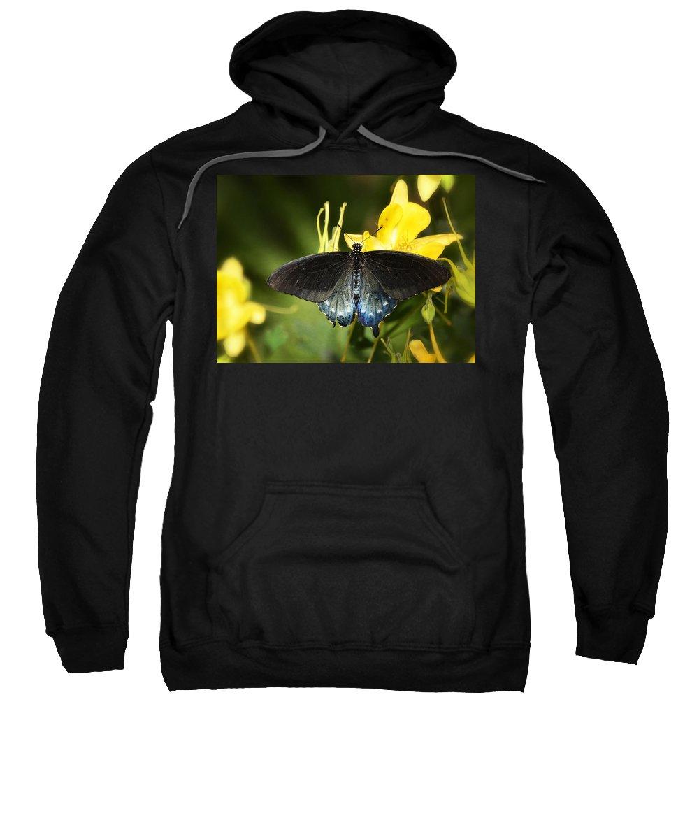 Swallowtail Butterfly Sweatshirt featuring the photograph The Beauty Of A Butterfly by Saija Lehtonen