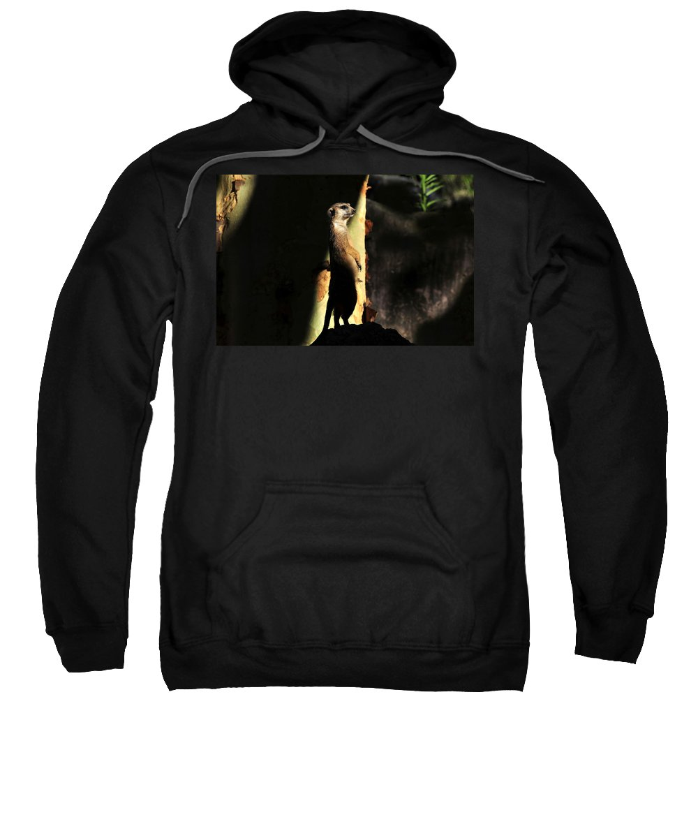 Wildlife Photography Sweatshirt featuring the photograph The Meerkats Perch by David Lee Thompson
