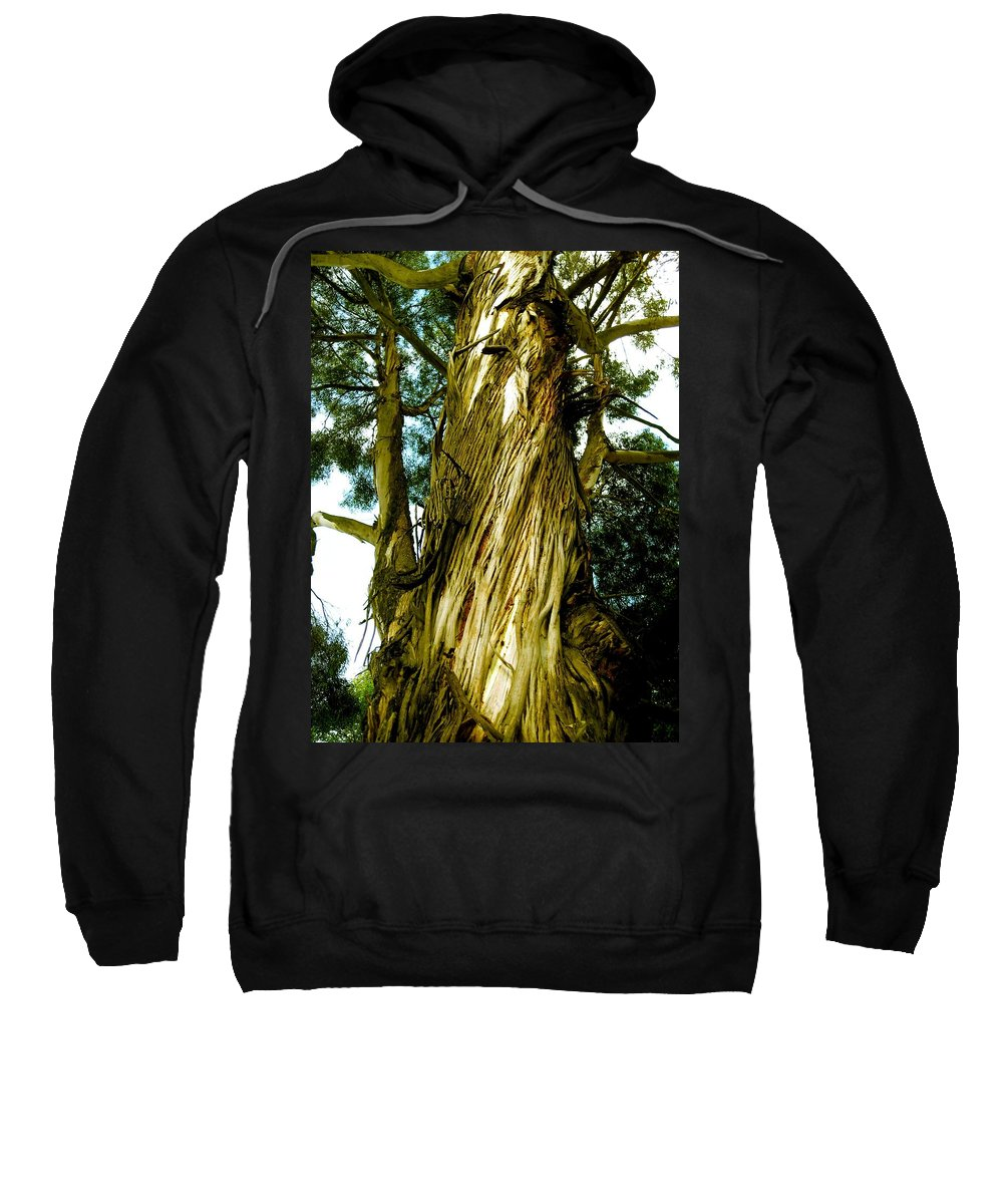 Trees Sweatshirt featuring the photograph The Morning Tree by Robert Margetts