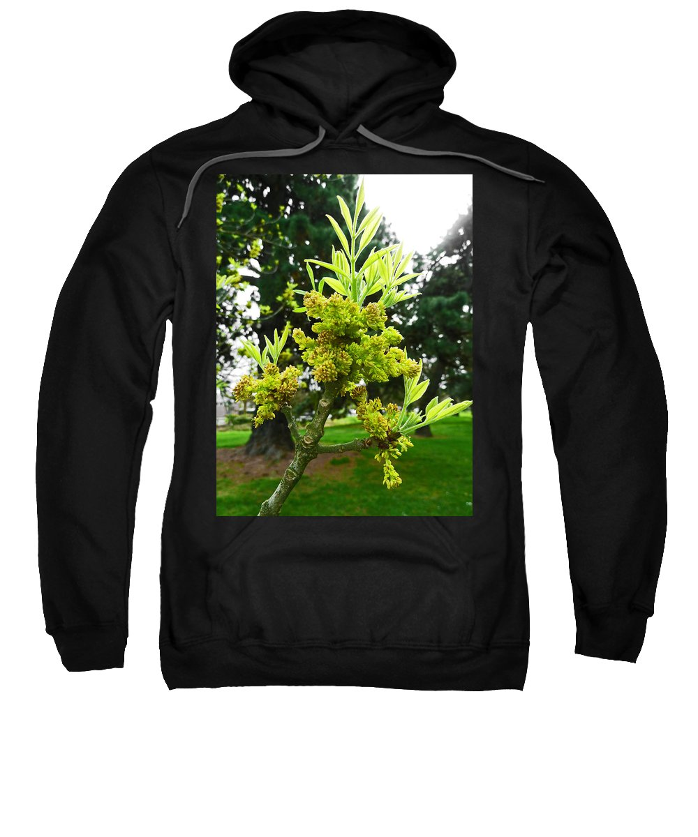 Blossom Sweatshirt featuring the photograph The New Growth Has Begun by Steve Taylor