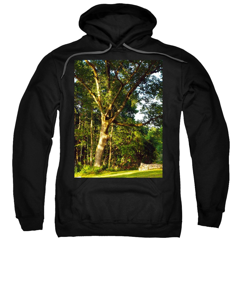Farm Animals Sweatshirt featuring the photograph The Strong Tree by Robert Margetts