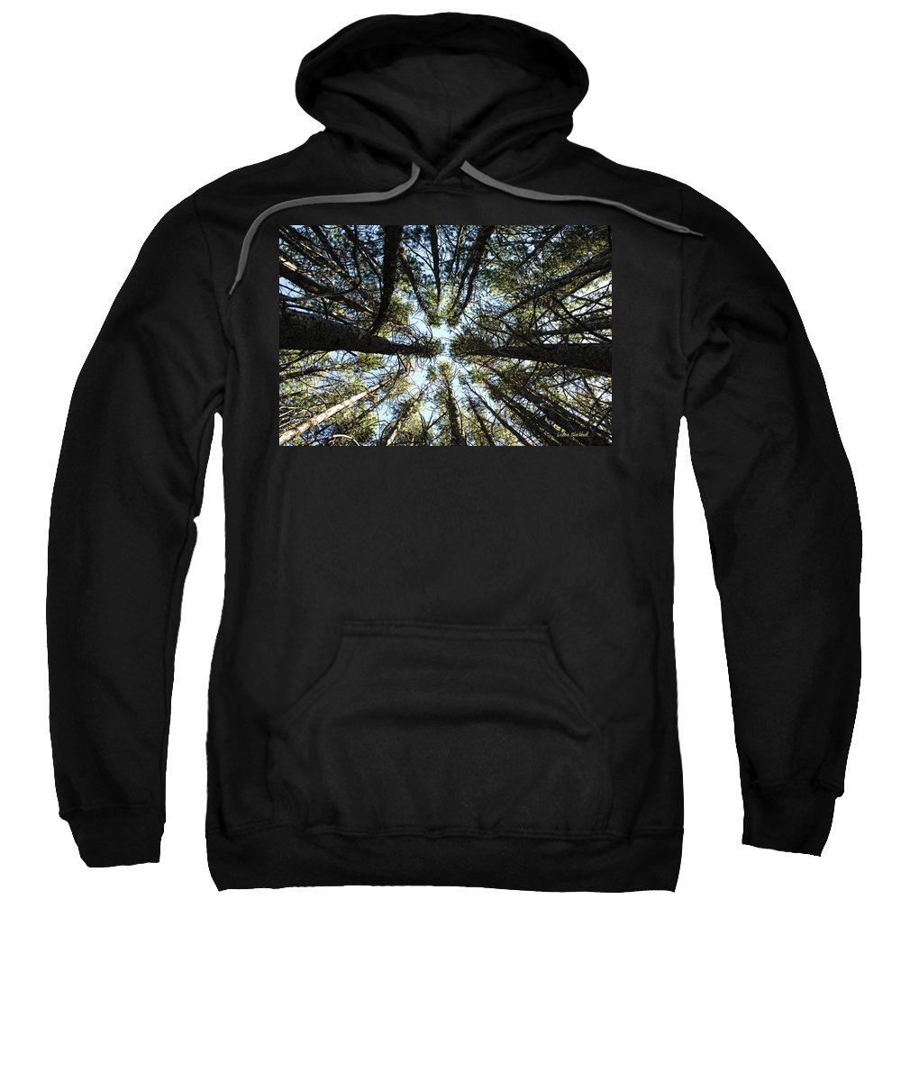 Trees Sweatshirt featuring the photograph Things Are Looking Up by Donna Blackhall