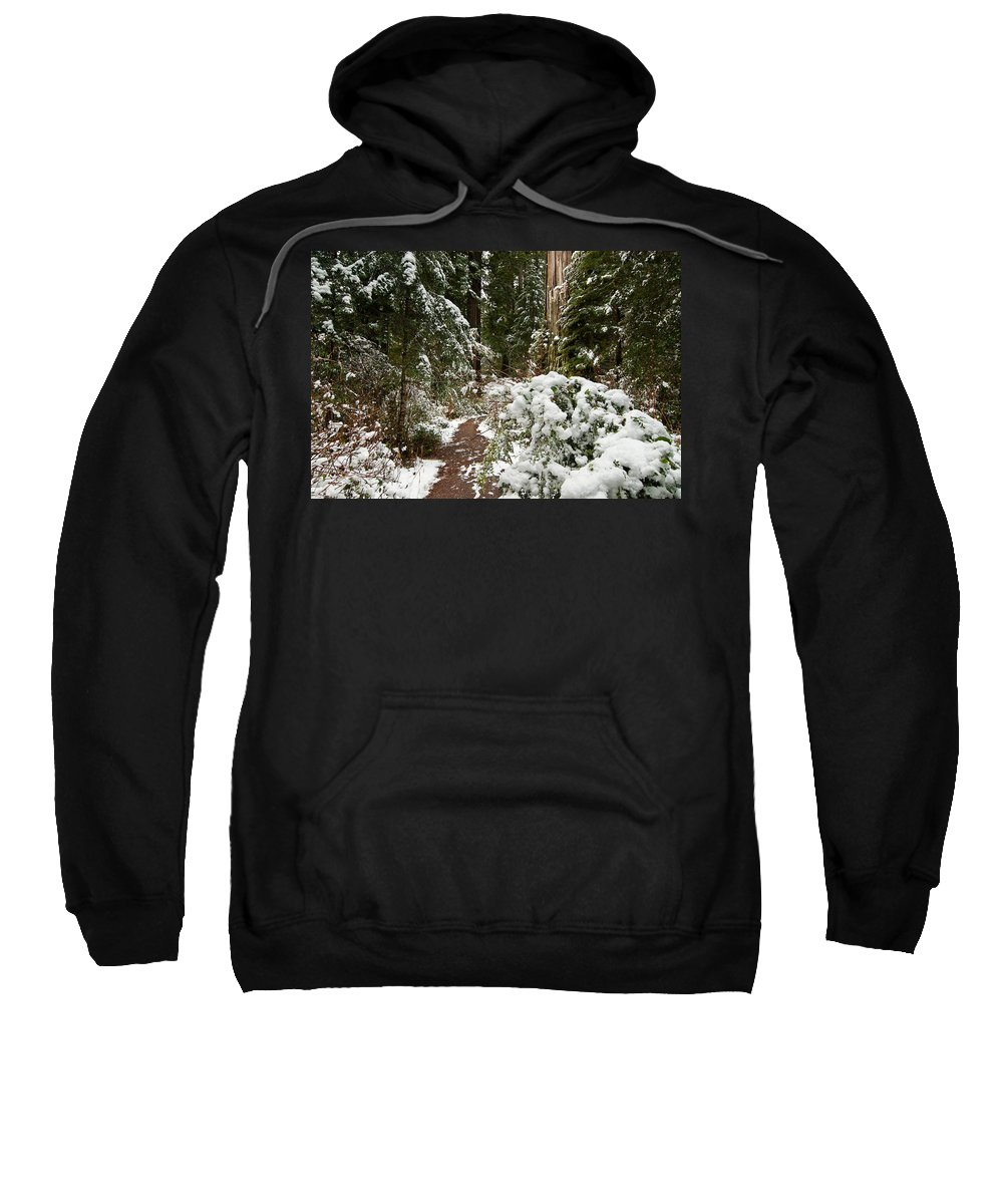 Lady Bird Johnson Grove Sweatshirt featuring the photograph Trail Through Snow-decked Redwood Grove by Greg Nyquist