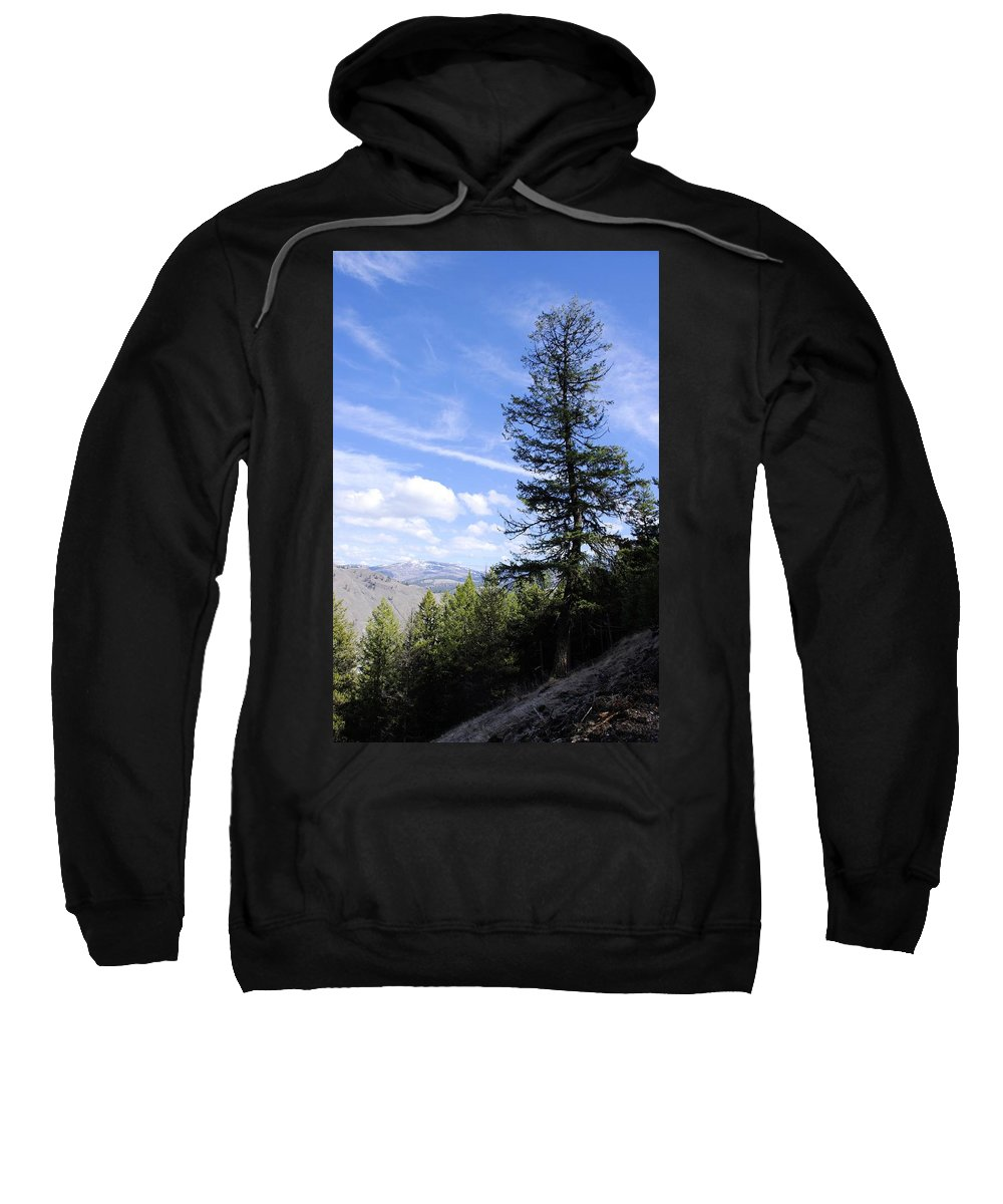 Tree Art Sweatshirt featuring the photograph Trail Tree View by John Greaves